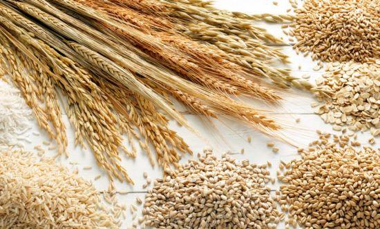 ảnh hưởng của chỉ số rơi đối với lúa mì